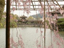 神苑の桜 (19568666)