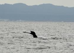 Whale Watching Reykjavik - Special Tours