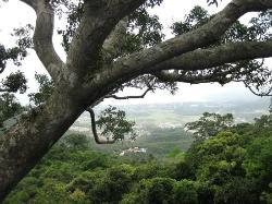 亚龙湾热带森林公园