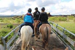 冰岛骑马之旅
