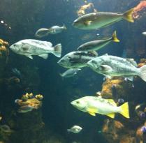 斯坦哈特水族馆