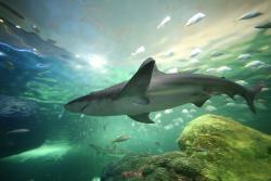 加拿大里普利水族馆