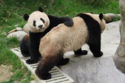 大熊猫保护研究中心都江堰基地