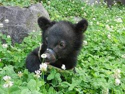 Okuhida Bear's Ranch