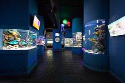 互动式水族馆