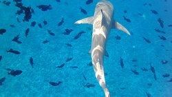 Shark Boy Bora Bora