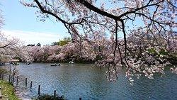 Inokashira Onshi Park