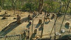 Mutsu City Wakinozawa Wild Monkeys Park