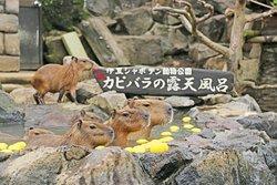 Izu Shaboten Zoo