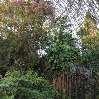 梦之岛热带植物室