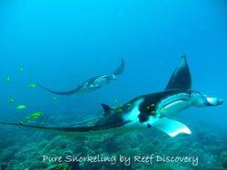发现珊瑚礁之浮潜之旅
