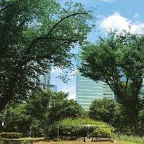 新宿中央公园