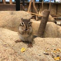 Squirrel Forest Hida Mountains Yaso Shizen Teien