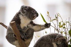 悉尼野生生物世界