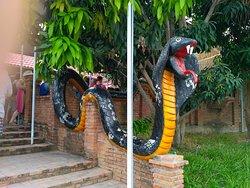 Nha Trang Snake Show