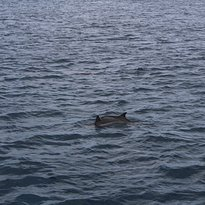 Dolphin Watching Adventure