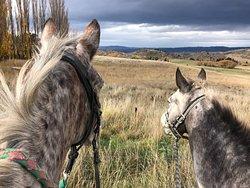 野外骑马探险
