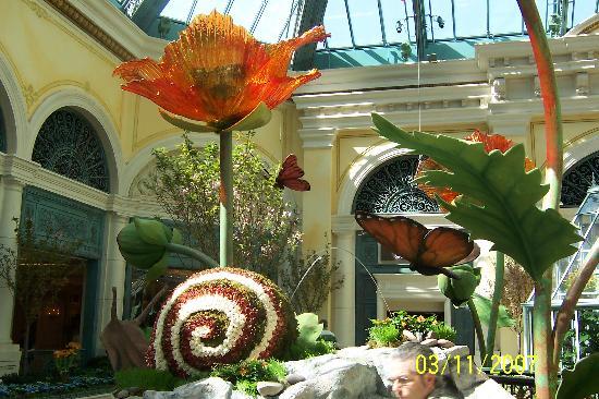 贝拉吉欧温室植物园