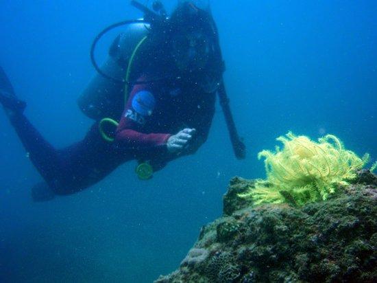 海南潜水-中潜