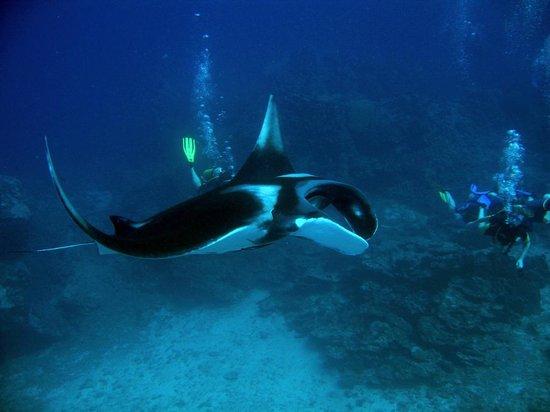 Oceanic Divecenter