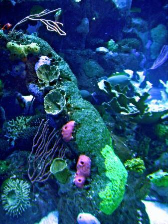 希尔威登水族馆