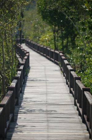 The Sirindhorn International Environmental Park